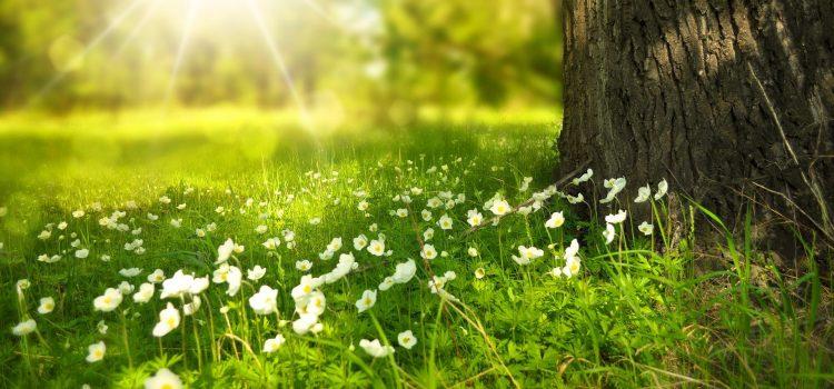 PiS przedstawia swoje ekologiczne pomysły